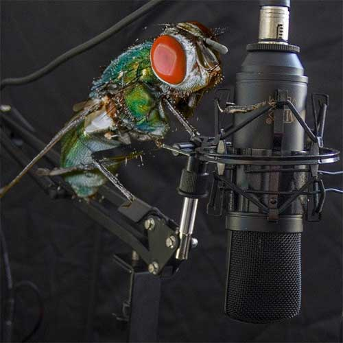 Being a fly on a microphone